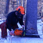 Environmental Conservation & Forestry